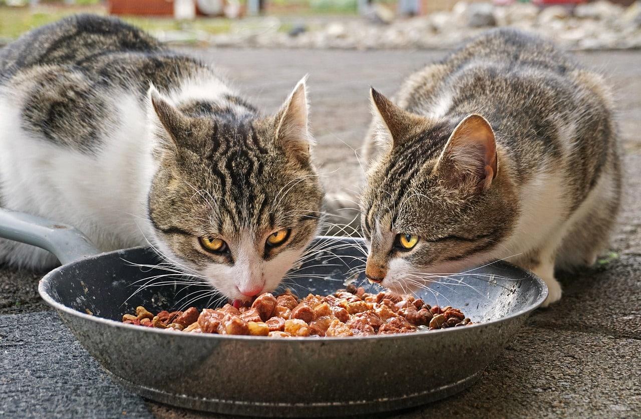 Comment donner la meilleure alimentation à son chat ?