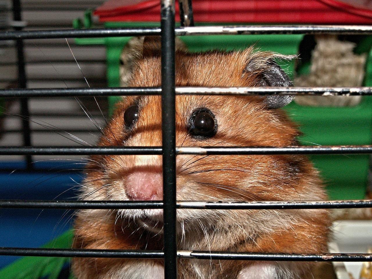 Choisir une cage pour son hamster : nos conseils