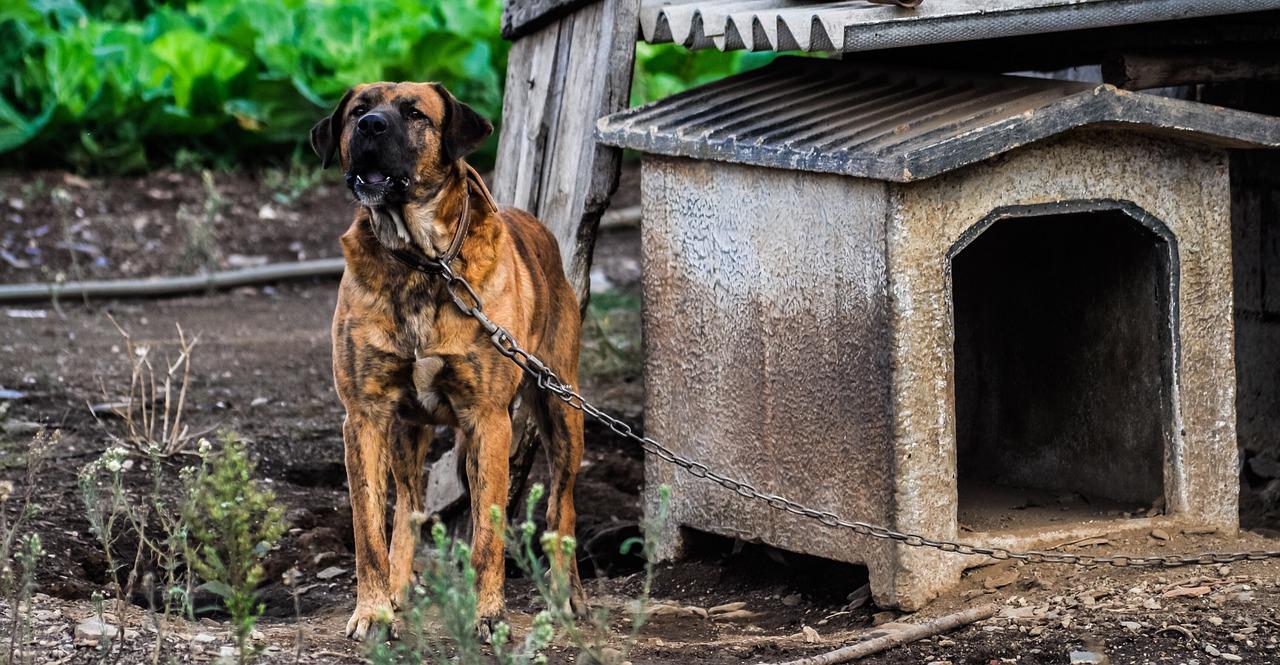 Comment apprendre à son chien à aller dans sa niche?