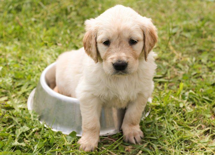 Comment choisir des croquettes de qualité pour votre chien?