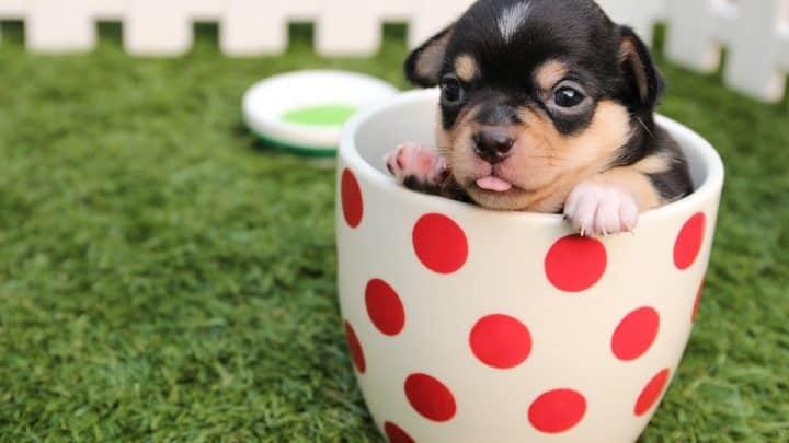 Quelle est la meilleure alimentation pour votre chien