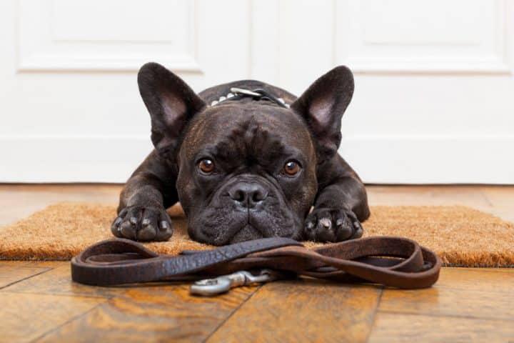 Comment réduire l'agressivité d'un chien avec ses congénères?