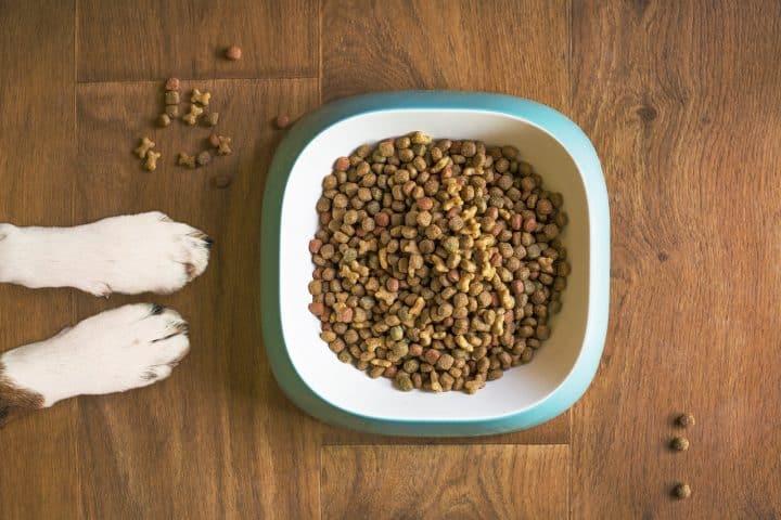 Comment bien nourrir son chien?