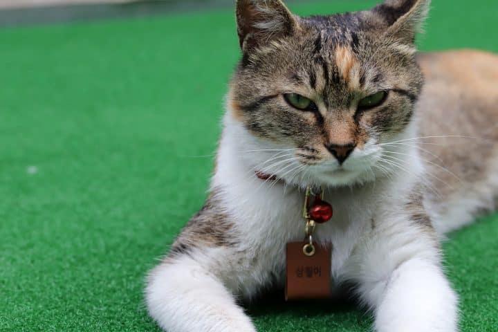 Des idées de bijoux pour animaux