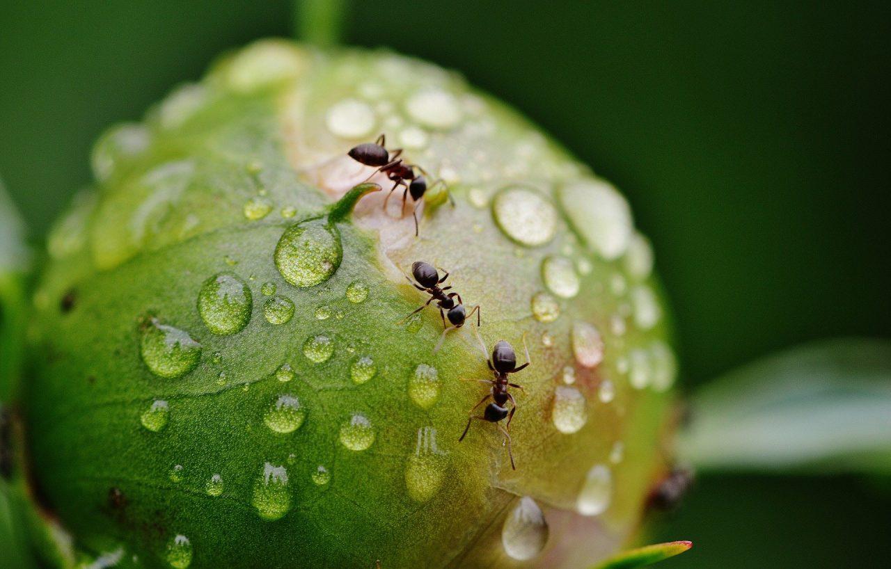5 faits intéressants sur la fourmis