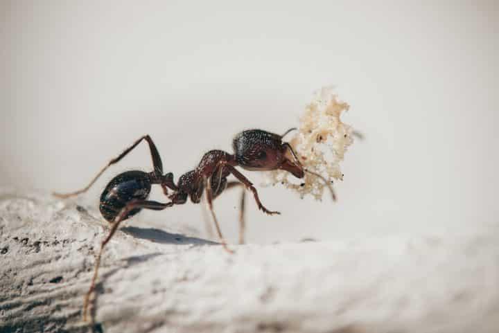 5 espèces incroyables de fourmis
