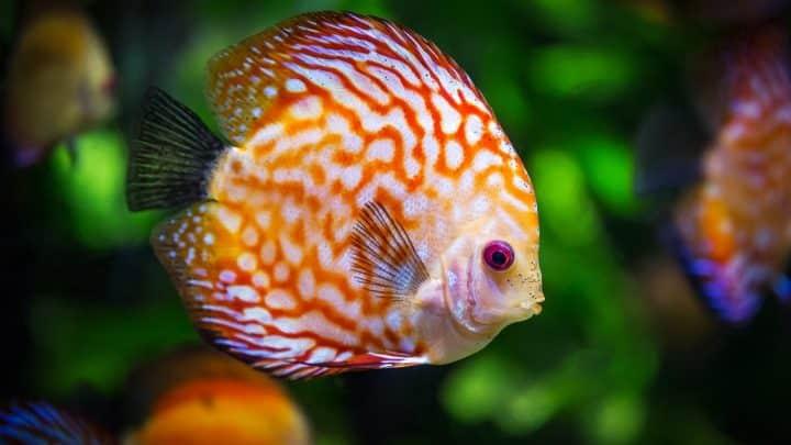 Comment choisir un aquarium ?