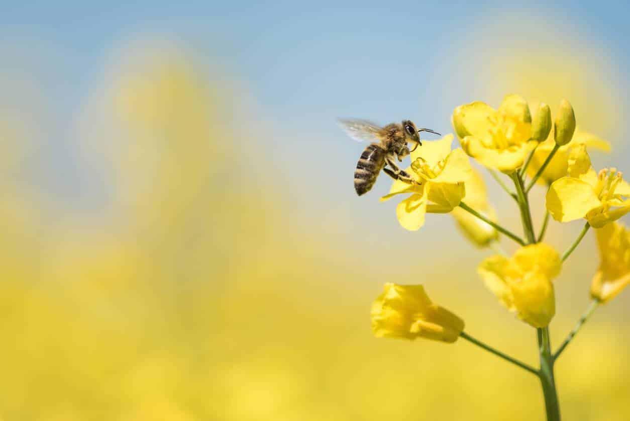 élevage abeilles