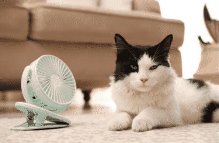 Protégez votre chat de la chaleur estivale en adoptant les bons gestes