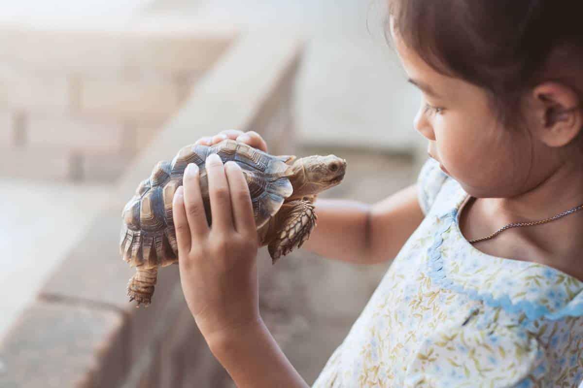 terrestre-laquelle-choisir-tortue