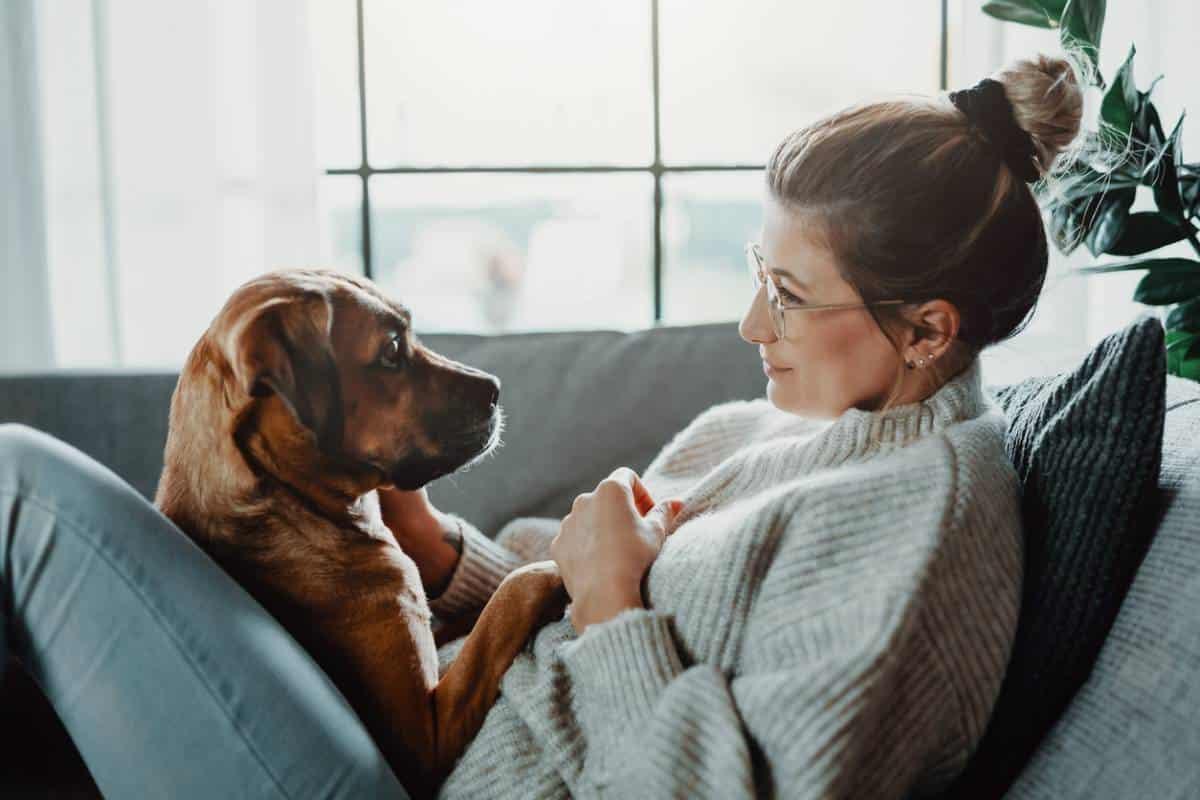 chien-comment-prevenir-les-principaux-problemes-de-sante