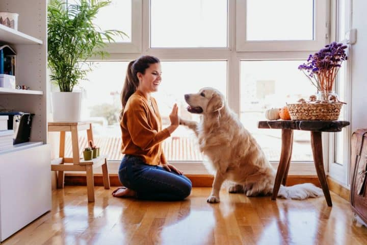 media-astuces-animaux-propre-maison-garder