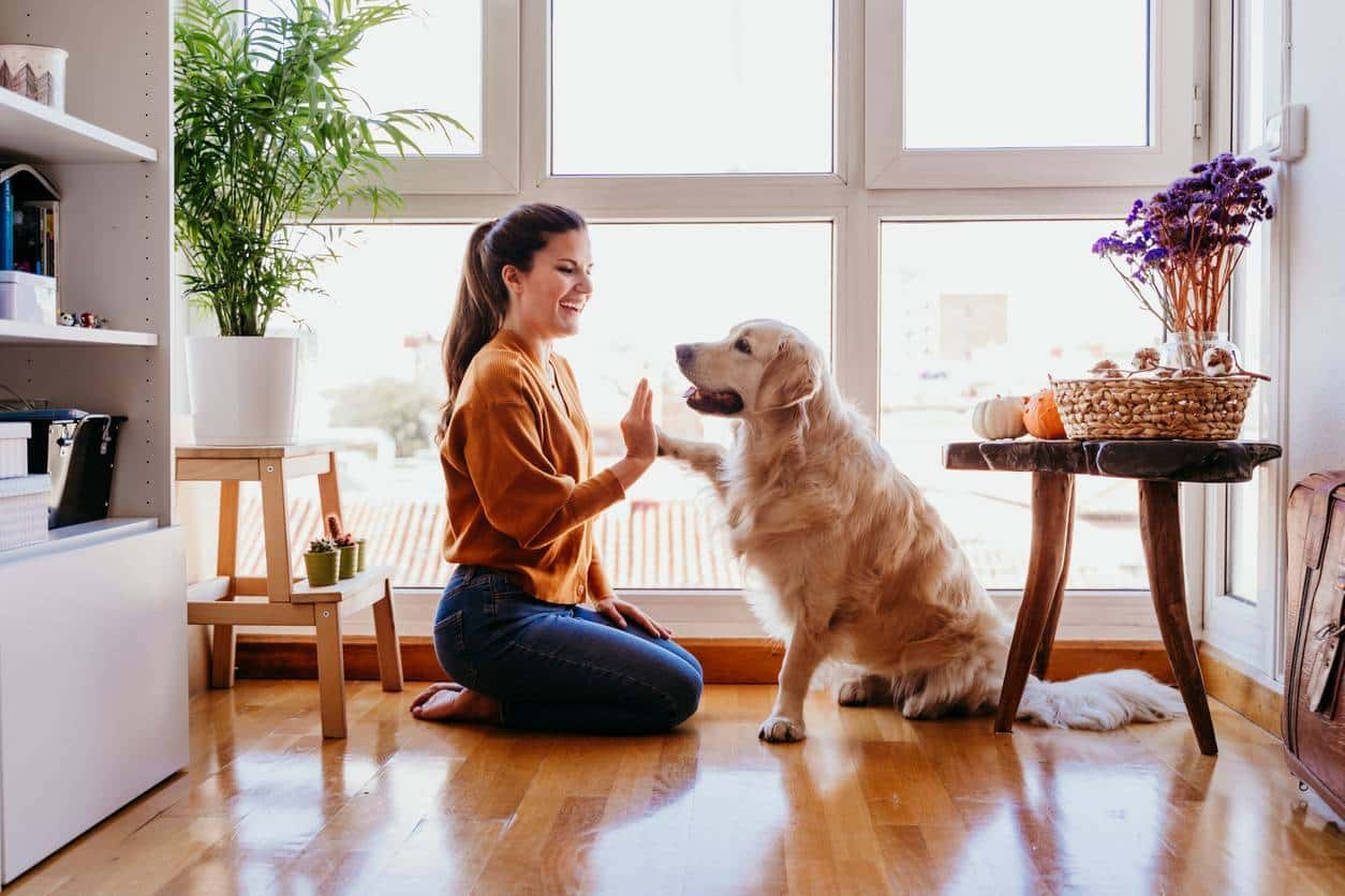 Pensez au bien-être de votre animal assurance